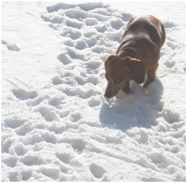 Peanut_in_the_snow_2006