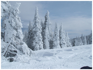 Snowmobiling_march_31_2005_005_4